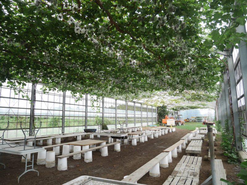 【ゲル研修】藤沢市の果樹園を視察してきました!